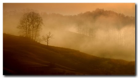 Misty morning, 2009