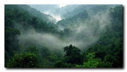 Misty trees, West Virginia 2007
